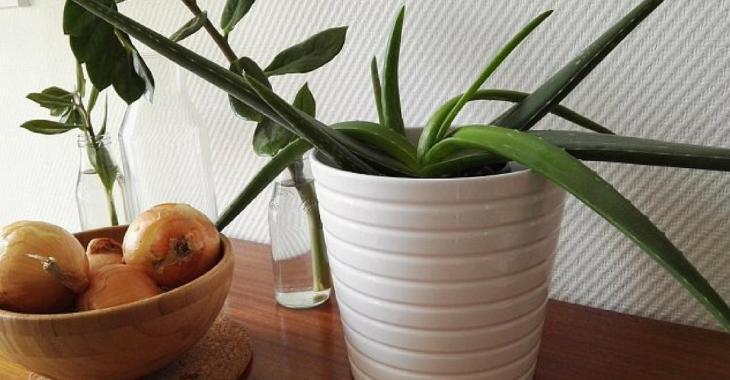 La NASA affirme que vous avez besoin de ces 10 plantes qui améliorent votre santé.