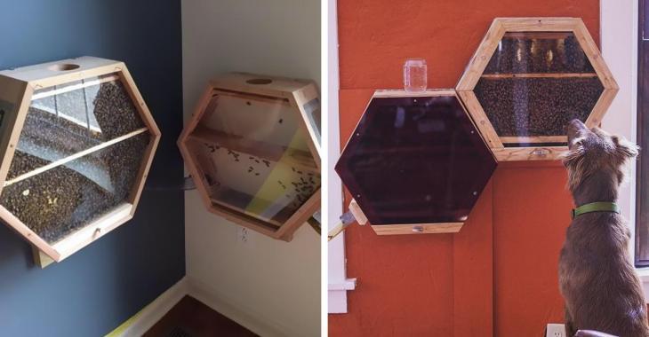 Une compagnie géniale installe des ruches d'abeilles dans les maisons de ses clients pour cette brillante raison.