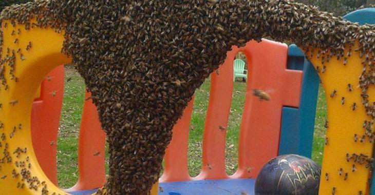 Une Québécoise lance un important avertissement si vous tombez sur un essaim d'abeilles.