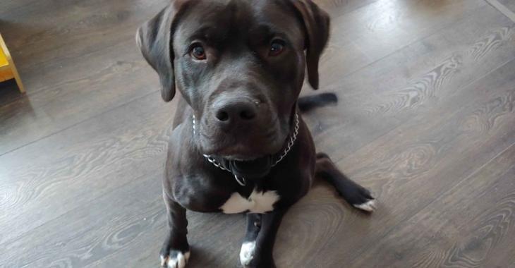 À Sainte-Marie en Beauce, une chienne prisonnière d'une maison inondée pendant plusieurs jours.