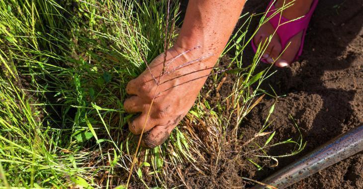 Des experts en jardinage révèle 9 herbicides naturels qui ne tuent pas les fleurs
